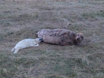 Don't miss the seal spectacle at Donna Nook!