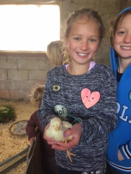 Who can resist a baby chick?
