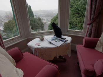 Room 3 - view from bay window (cat not included!)