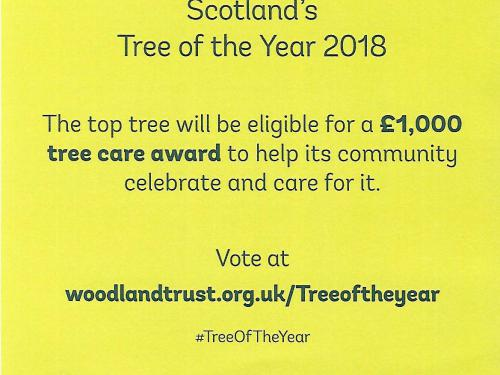 Please Vote us for Tree of the Year 2018
