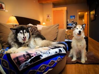 Pet Suite #2
