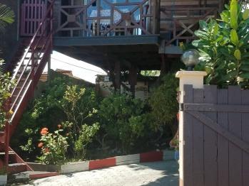 Cabane a Marie dans le manguier centenaire