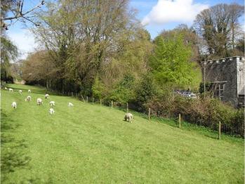 Our sheepish neighbours