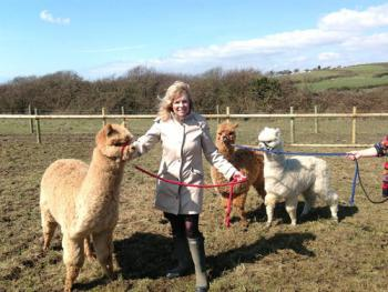Our alpacas Kim, Barney & Angus