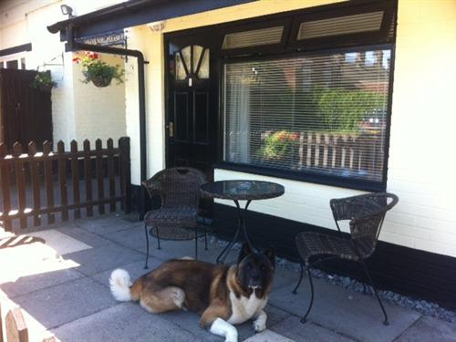 Resident dog outside  one of our dog friendly chalets