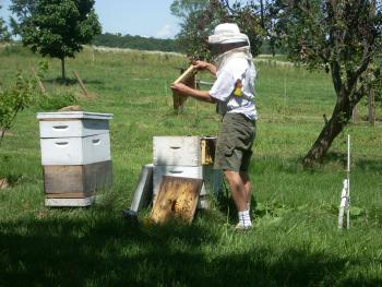 Dave is happy to talk beekeeping with our guests.