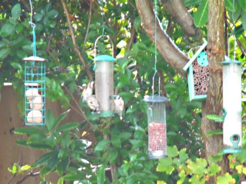 Bird feeders for local wildlife
