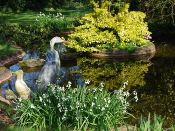 Relax in the gardens at Langaller Manor