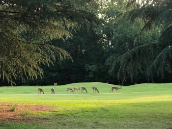 Deer and other wildlife frequent the fields surrounding the properties