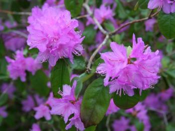 B&B Flowers