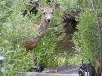 Wildlife at The Cabins at Country Road