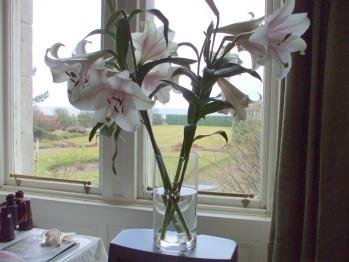 Dining Room window - at Carlton Seamill