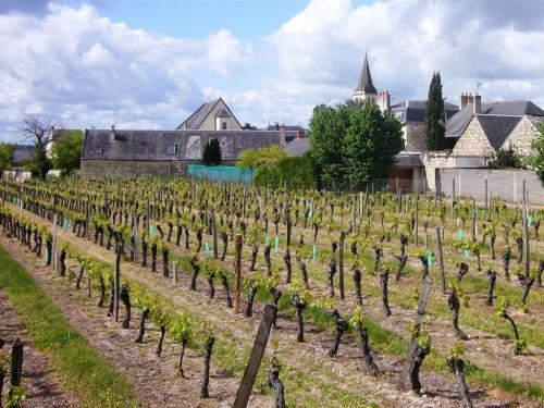 Vue de La Dixmeresse depuis les vignes