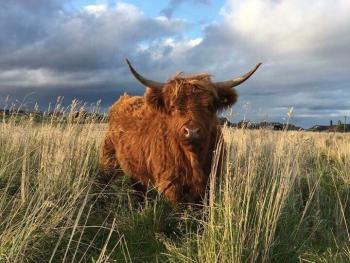 Go hillwalking and explore our beautiful country side. This is one of our local highland cows