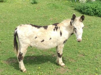 Notre âne Arthur