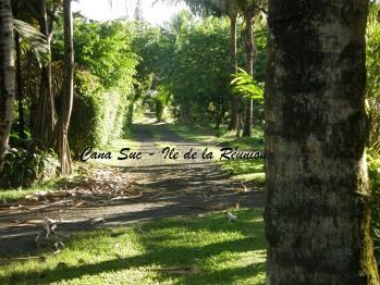 Chemin d'accès aux bungalows
