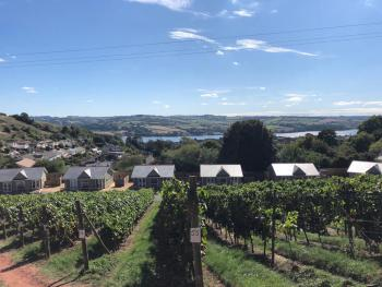 Old Walls Vineyard - View from the vines