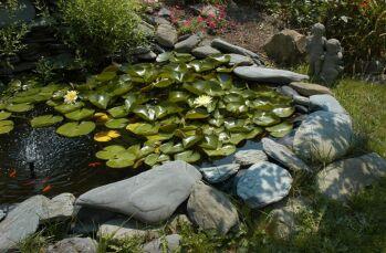 Water Pond/Garden