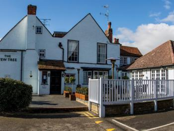 The Yew Tree -