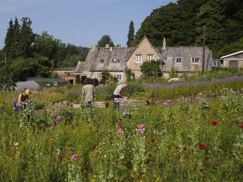 Vegetable Garden in Bloom
