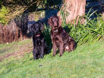 Hardy & Willis in the garden