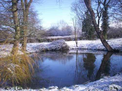 The garden pond in winter time