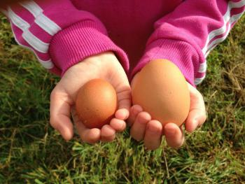 Help us collect the chickens and duck eggs.