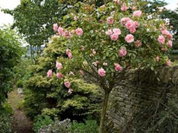 The Garden is full of pretty roses...