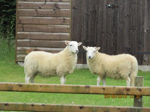Visitors to the Parlour garden!