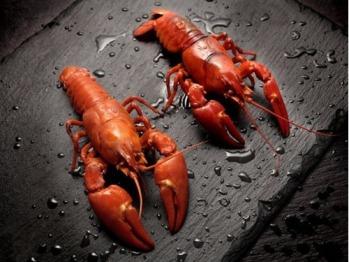 Fresh crayfish for our local, seasonal menu