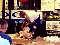 Speed Shearing at The Oxford Arms  August 2019