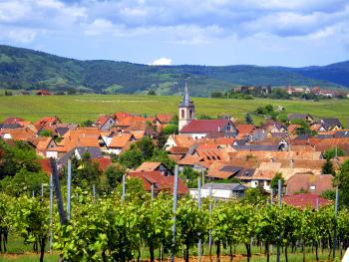 Vue sur le village de Beblenheim depuis le vignoble
