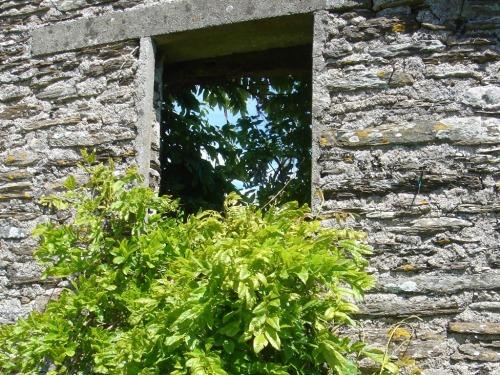 Garden view through old barn wall