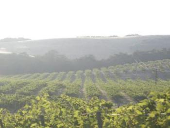 Vineyard views from all areas of the property.