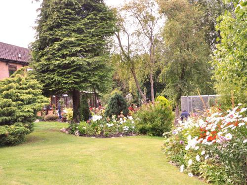 Our gardens looking towards the house