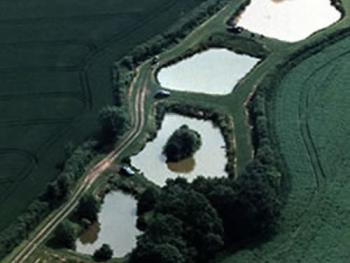 Coarse Fishing Ponds