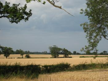 Local Suffolk countryside
