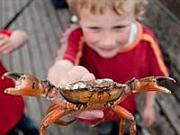 CRABBING AT WEST BAY