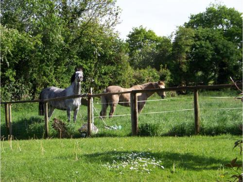 Friendly Natives (Star and Mr Punch) at ease in the orchard.