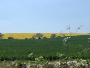 Local view of countryside near Sherborne.  This walk is less than 5 minutes drive away.