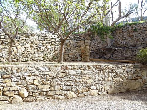 Abricotiers côté jardin