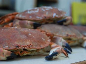 Fresh Cromer crab