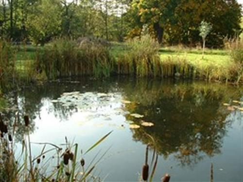 View of the pond in the grounds of the Hotel