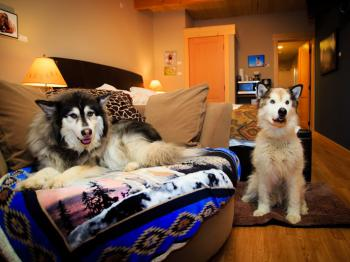 Dogs in Paws Awhile Pet Suites