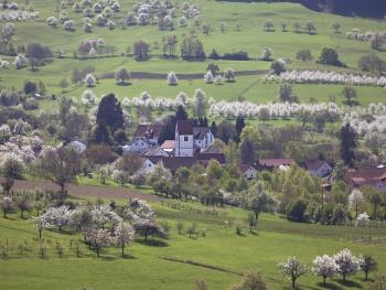 Obereggenen Kirschblüte