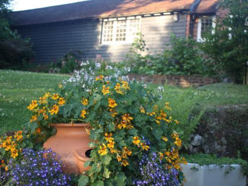 Pots of summer flowers.