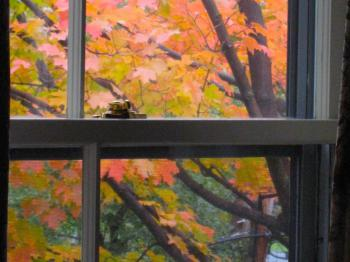 Victorian Suite Fall Window View