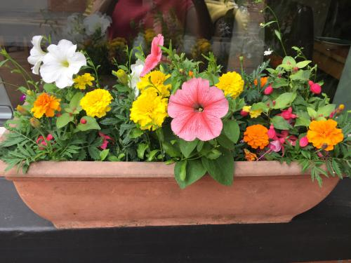The lovely summer window boxes.