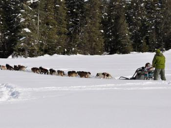 DOG SLEDDING - MOOSE MEADOWS