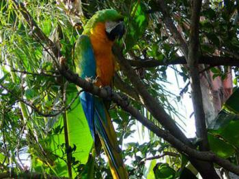 Rio our Blue Macaw